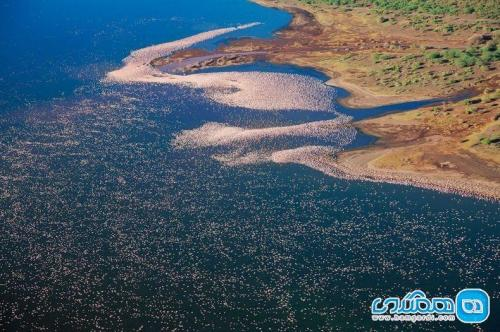دریاچه ناکورو کنیا؛ مامن هزاران فلامینگوی مهاجر
